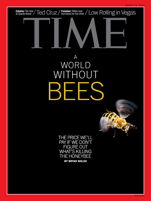 Bees: Cover of Time