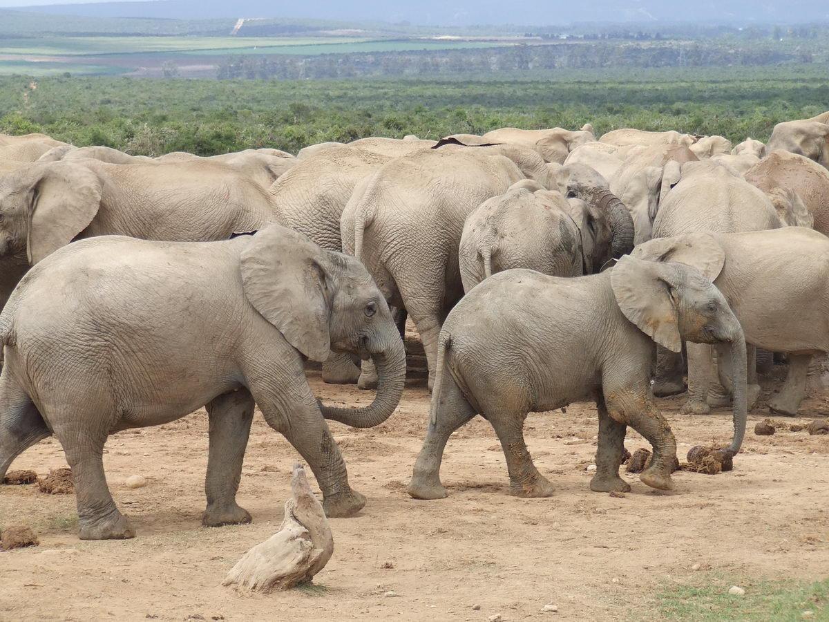 Elephant_Park_21